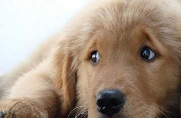 Mindössze felfüggesztett börtönbüntetésre ítélte a bíróság a férfit, aki felakasztotta a kutyáját
