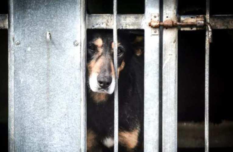 Félő, hogy újra el kell altatni az Illatos úti gazdátlan kutyákat Karácsony szerencsétlenkedése miatt