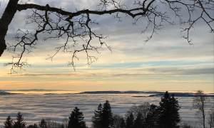Aussicht auf Nebelmeer vom Bachtel