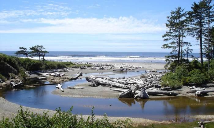 Schwemmholz, Driftwood
