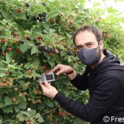 Wireless radio systems to remotely monitor greenhouses