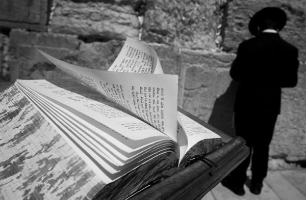 Torah y rabí