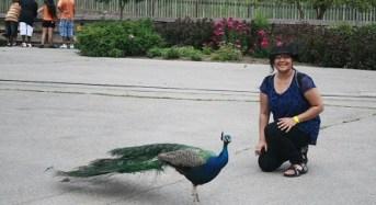 Internship Experience | Garima Garg | DTU & UNL,USA