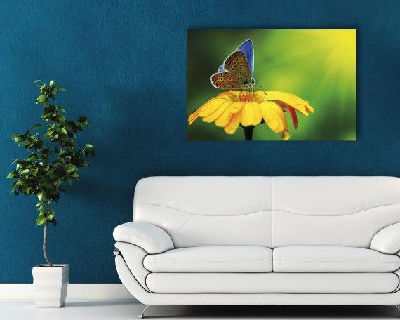 Stampa su tela - Farfalla su un fiore