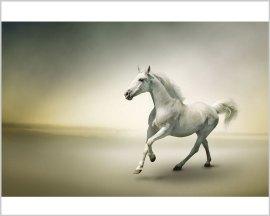 Stampa su tela-cavallo