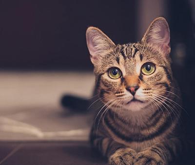 gatos-de-interior