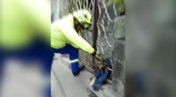 ELEMENTOS DE PROTECCIÓN CIVIL DE SANTA CATARINA RESCATAN A PERRO