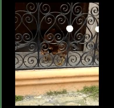 #REPORTECIUDADANO ANIMALES QUEDAN ENCERRADOS EN CASA ABANDONADA.