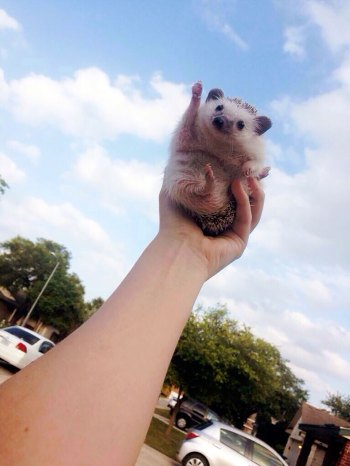 These are seriously the cutest photos of hedgehogs ever!