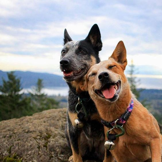 5 Best hikes around seattle with your dog