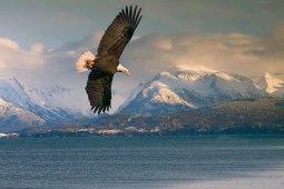 Alasca 09