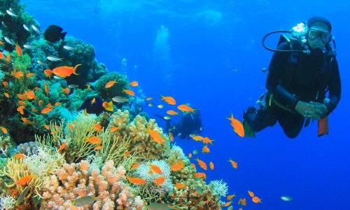 Mergulho em Key West