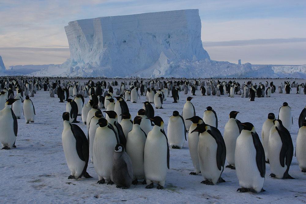 Antártida - Pinguins Imperador