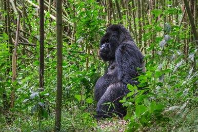 Wilderness-Rwanda-07