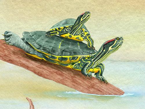 web_bpa-turtles