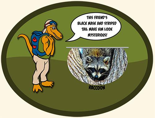 dinosaur-valley-sp-raccoon-bottom