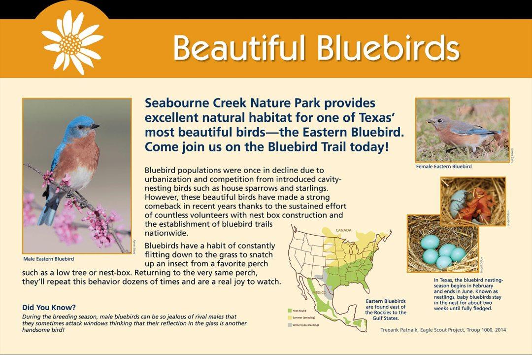 City-of-Rosenberg-beautiful-bluebirds
