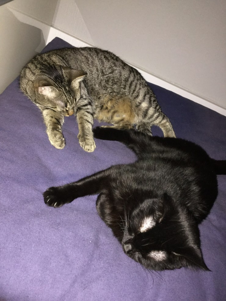 Katzen Frieden