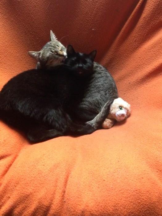 Katzenkorb Meditation