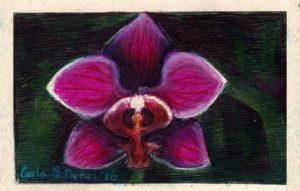 Orchid, by Carla Núñez
