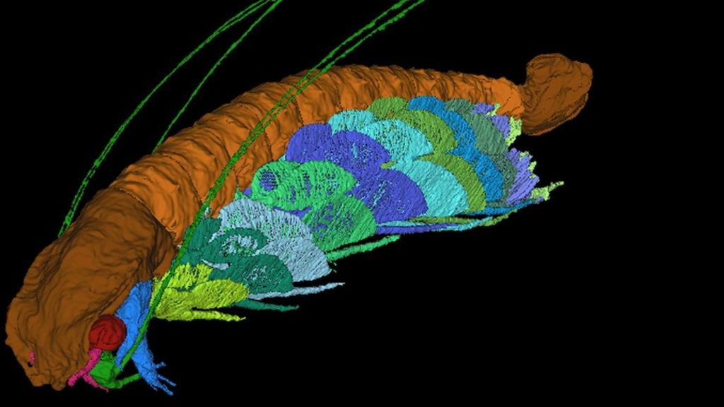 95256328 mediaitem95256324 - Fossil named after Sir David Attenborough