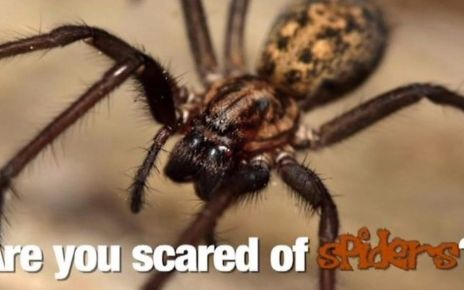 95303560 p04xwn2g - Afraid of spiders? Charity's steps to tackle arachnophobia