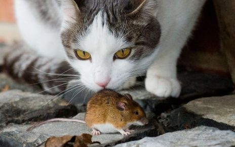 95338980 gettyimages 460710996 - How the mouse came to live alongside humans
