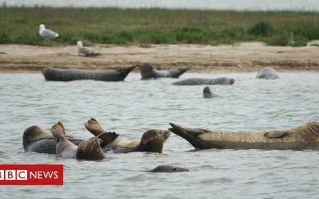 102249808 zsl seal survey 27 june 2018 14 creditzsl jonathankemeys - Why scientists are counting seal pups in the Thames Estuary