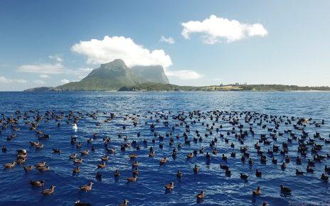 p06bt4q6 - Marine plastic: Hundreds of fragments found in dead seabirds