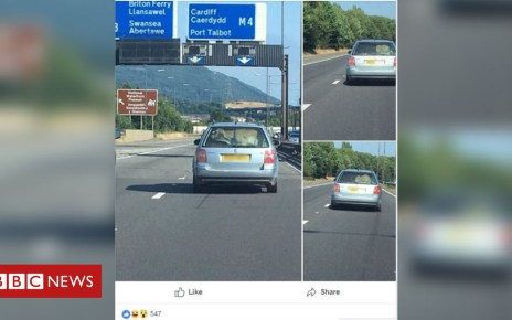 102426025 cowcompnew - Police investigate after cow seen in back of a car on M4 near Briton Ferry
