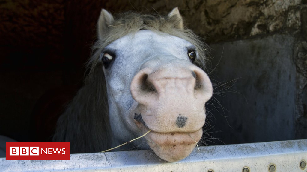 102512282 gettyimages 477136182 - Horse sense: Happiest equines love to snort, says study