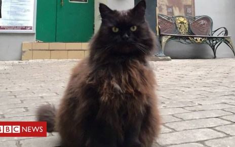 102803399 c8a51f8e e36d 4209 b89f d2240c6c8346 - Cat stolen from Russian museum found after social outcry