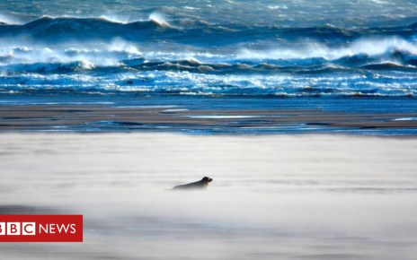 103185168 seals - Disturbance of 1,000 seals at Forvie nature reserve investigated
