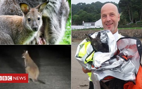 103322347 afcb86c0 78b3 4cd7 af0a 29858e8470e9 - Isle of Man wallaby-related police call-outs revealed