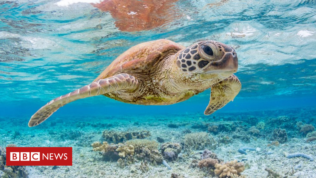 103412375 gettyimages 834977064 - 'A single piece of plastic' can kill sea turtles, says study