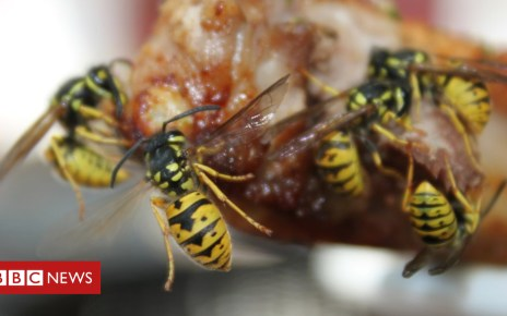 103484612 gettyimages 182242474 - Are wasps the bees knees? Scientists think they should be