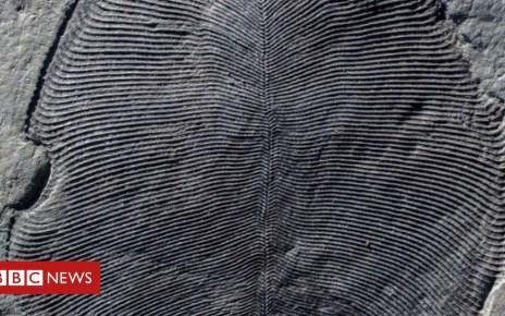 103515071 mediaitem103515070 - Earliest animal fossils are identified