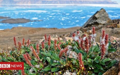103585462 ellesmere - Taller plants moving into warmer Arctic