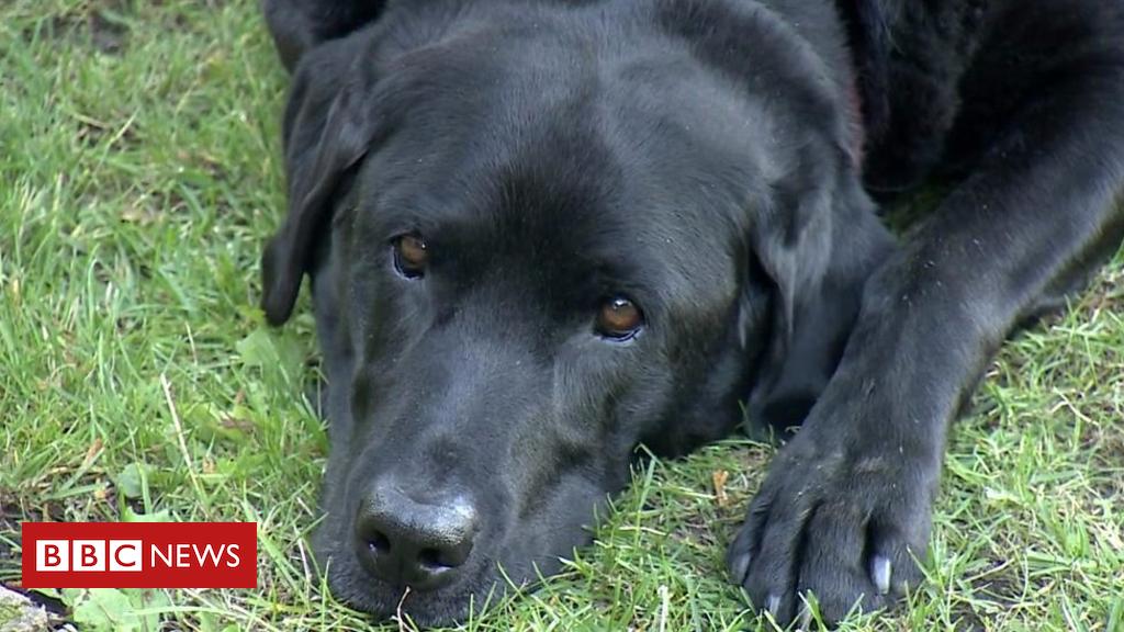 103601570 p06m8rt1 - Should dogs go vegan?