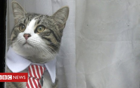 103882009 hi036388233 - Julian Assange given feline ultimatum by Ecuador