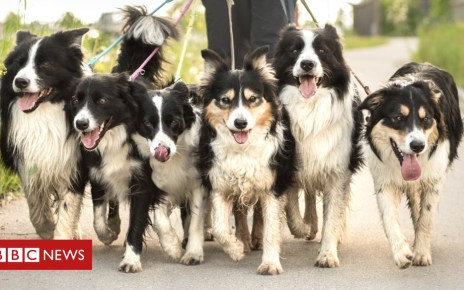 103887809 gettyimages 880383194 - A long walk: New insight into history of dogs and humans