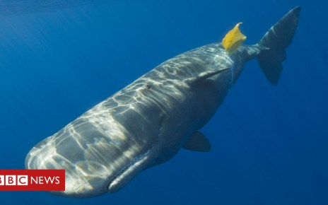 104009132 gettyimages 549036767 - Single-use plastics ban approved by European Parliament