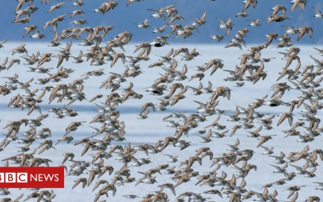 104206171 gettyimages 118476811 1 - Climate Change: Arctic 'no safe harbour' for breeding birds