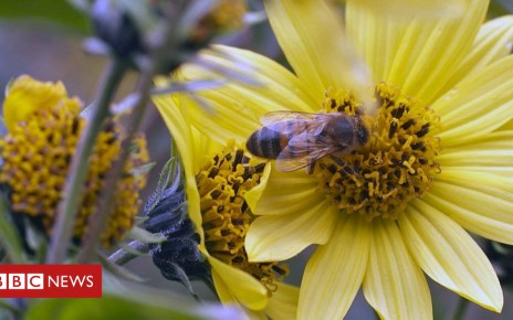 104249442 oracle world bee project 1 - Hopes for AI to stop bee decline