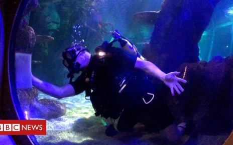 104502152 p06sxd21 - Great Yarmouth aquarium's tanks spruced up by Army divers