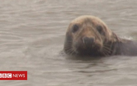 104513278 p06szklj - Seal colony in Norfolk expects more than 2,700 pups