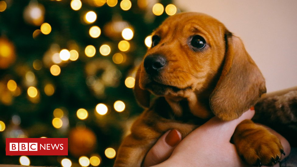 104732077 gettyimages 865966714 - Christmas pet adoption ban at German shelters
