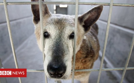 104991131 gettyimages 563991971 - Californian law change means pet shops can sell only rescued animals