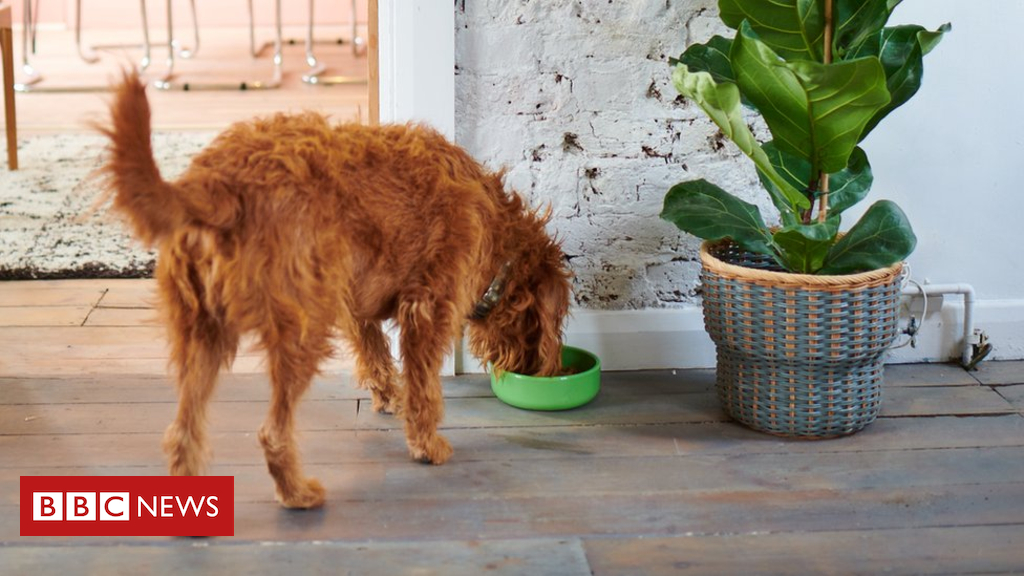 105122687 yora studio.278 - Climate change: Will insect-eating dogs help?