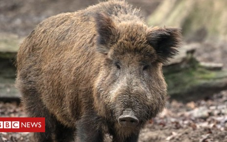 105368353 hi051362239 - Denmark builds anti-pig border fence amid swine flu fears